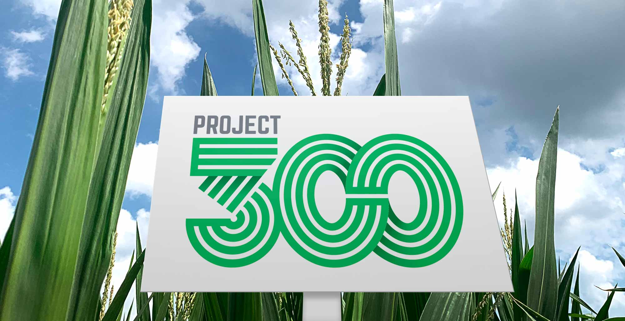 Project 300